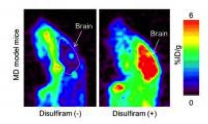 PET imaging in Menkes disease model mice