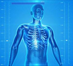 human-skeleton STOCK